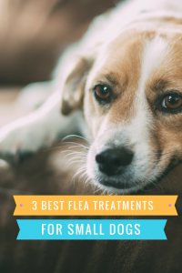 Best Small Dog Flea Treatment