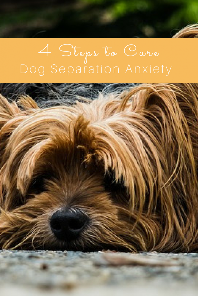 Cure Dog Separation Anxiety with our 4 Simple Steps