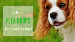 Best Flea Drops for Small Dogs