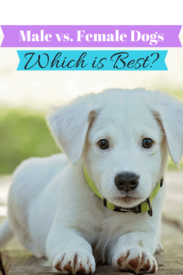 Male vs Female Dogs - Which is Best