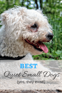 Quiet Small Dog Breeds